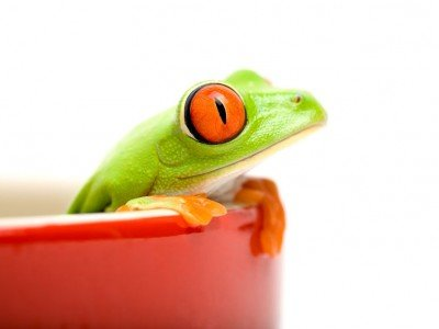 Chronic Pain and The Boiled Frog - Blue Chair Wisdom - Auckland life coach and TRE